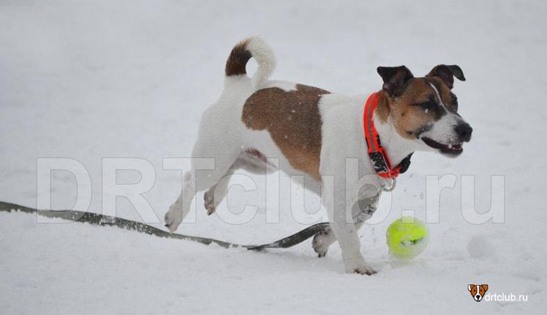 Поводок для собаки: плюсы и минусы