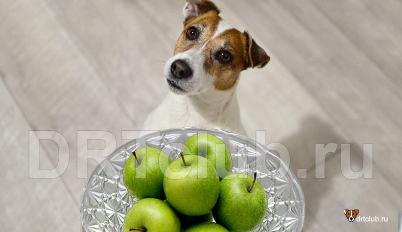 Можно ли зелёные яблоки собакам