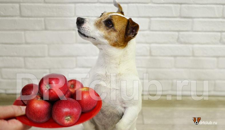 Как правильно давать собаке яблоки