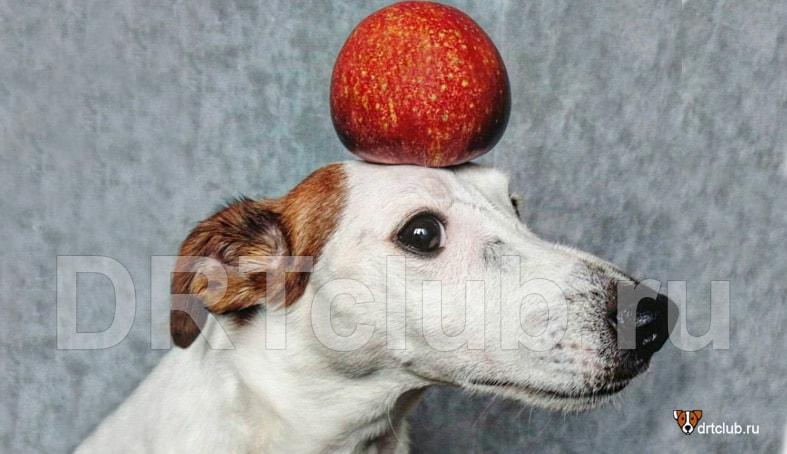 Можно ли собаке яблоки: вопросы и ответы