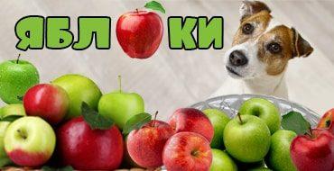 Яблоки для питомцев: можно или нельзя
