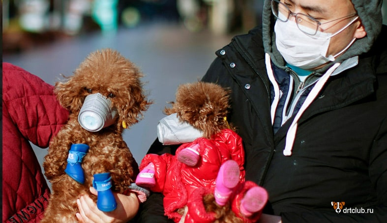 Пандемия коронавируса COVID-19