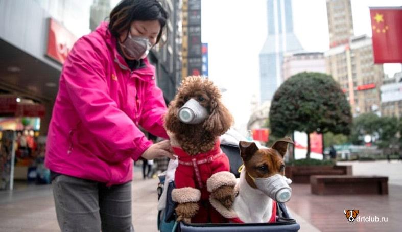 Коронавирус COVID-19. Может ли собака заразиться коронавирусом от человека и наоборот