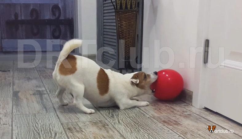 Дома играть с Мега яйцом не рекомендуется