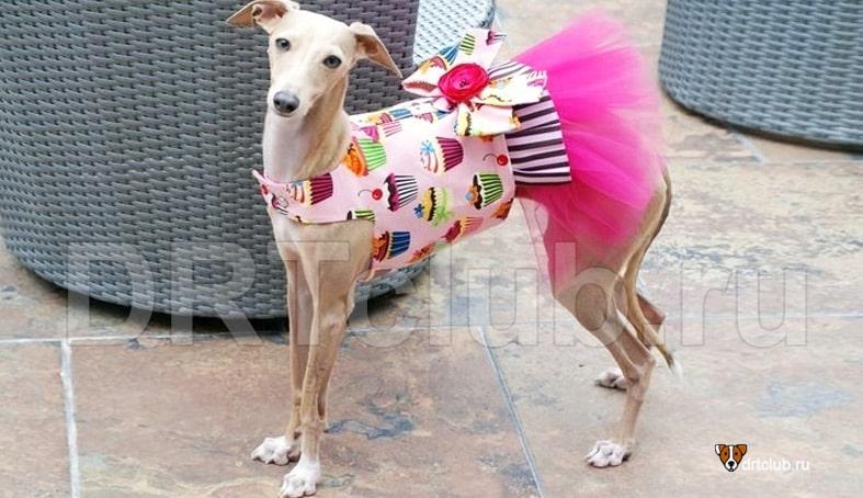 Вариации платья для собаки