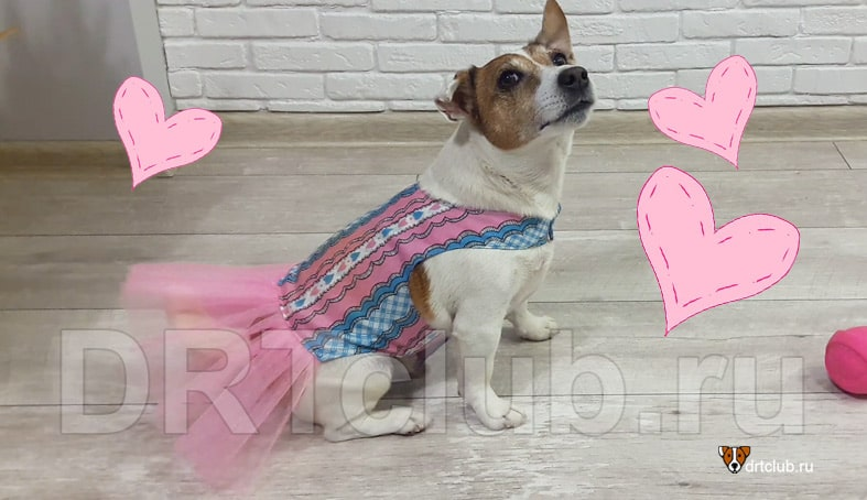 Нарядное платье для собаки своими руками