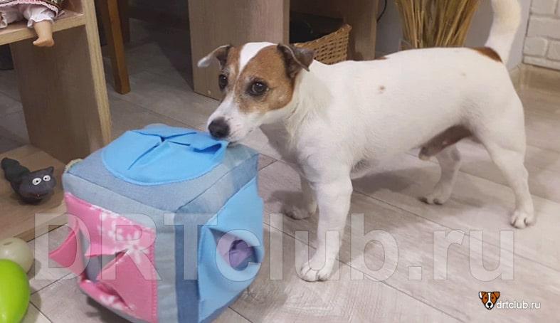 Мягкий кубик для собаки