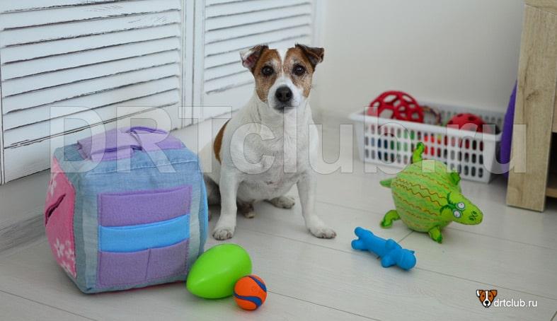 Нюхательный кубик для собаки