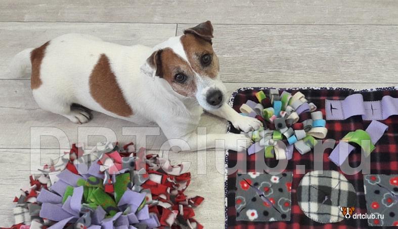 Поисковый или нюхательный коврик для собак