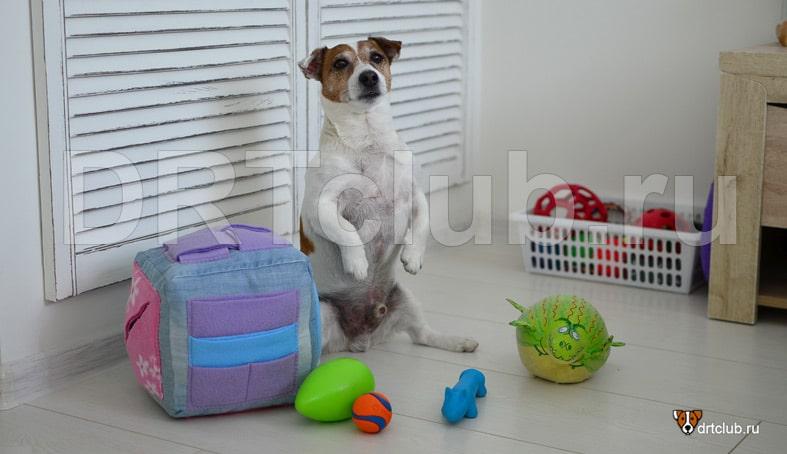 Поисковый кубик для собак