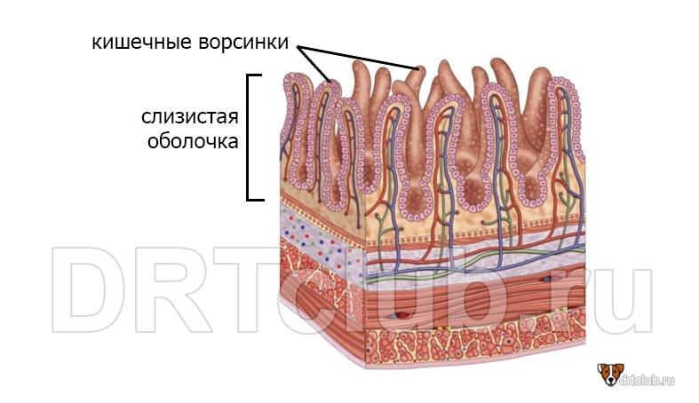 Короновирусный энтерит у собак