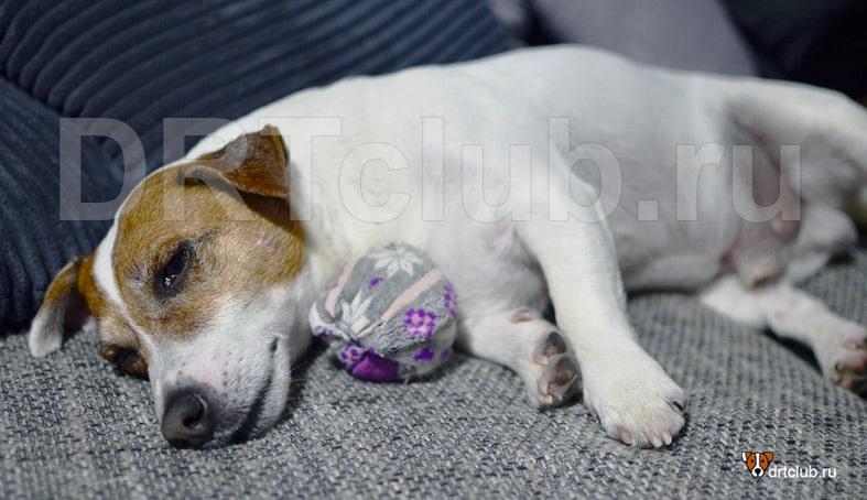 Что такое энтерит у собак