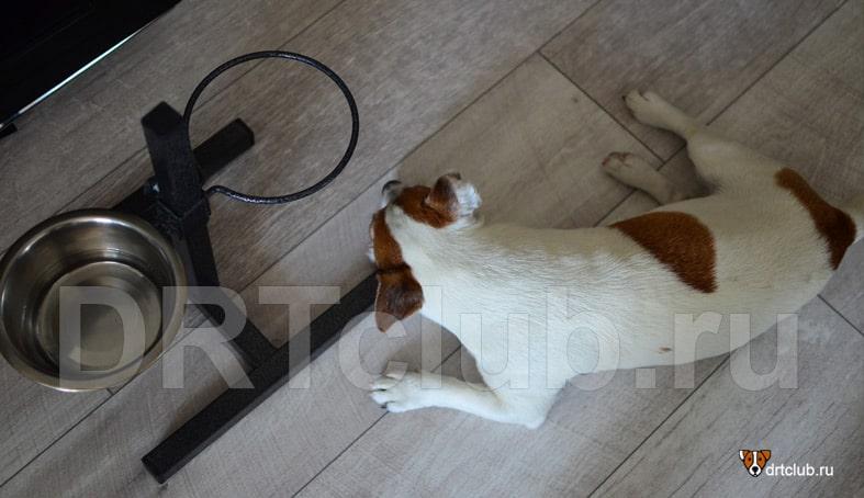 Кормление собаки во время болезни