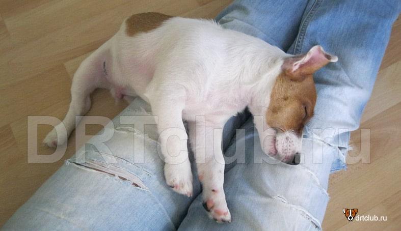 Энтерит у щенков: симптомы