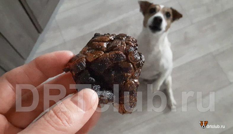 Сушёное лёгкое в духовке для собак своими руками
