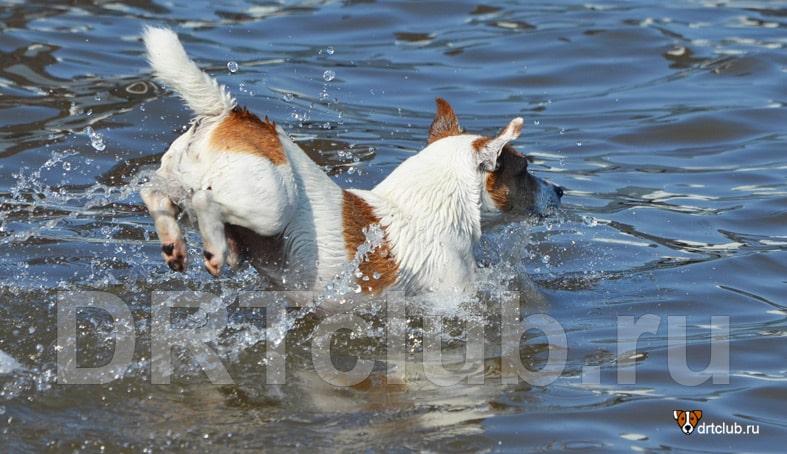 Отдых с собакой на море: рекомендации
