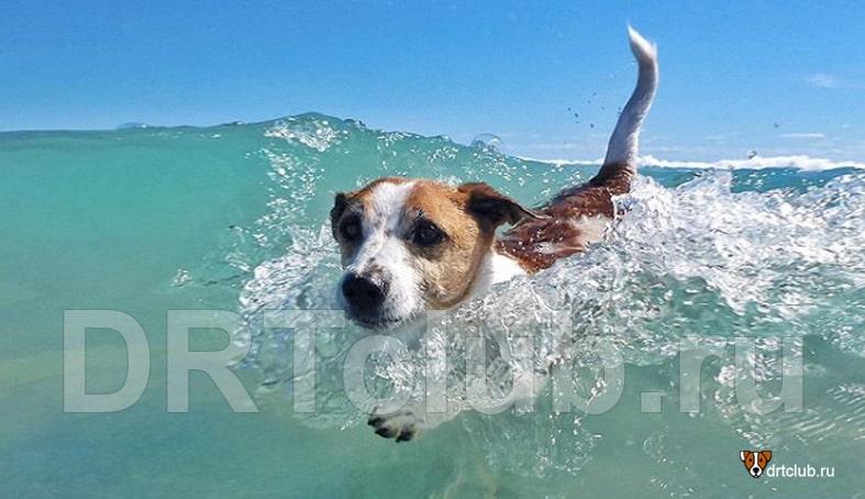 Собака плавает в море