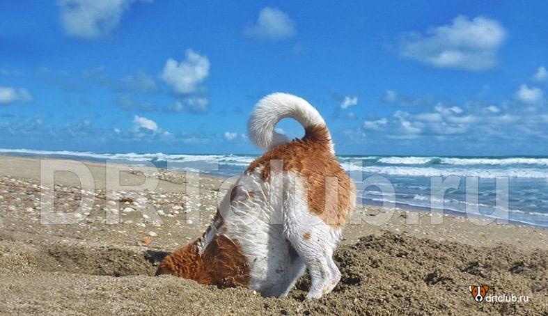 Собака на пляже в песке
