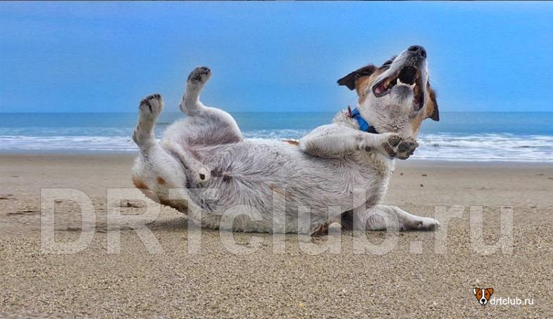 Собака резвится на берегу моря