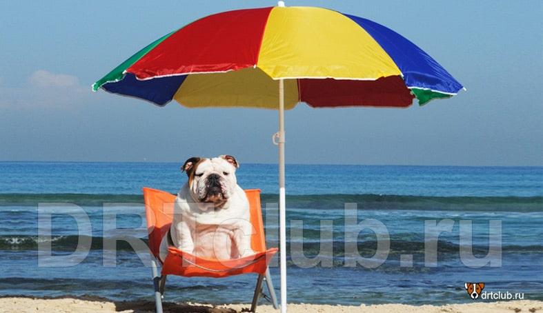 Собака под зонтиком на берегу