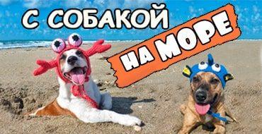 Собака летом отдыхает на море