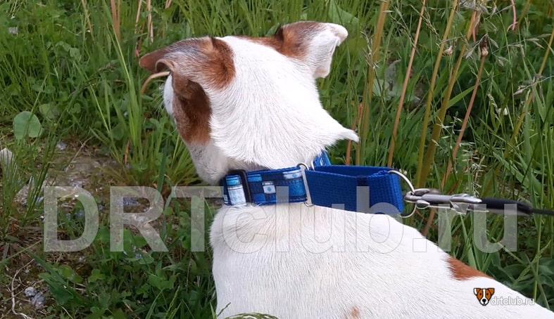 Ошейник удавка для собак