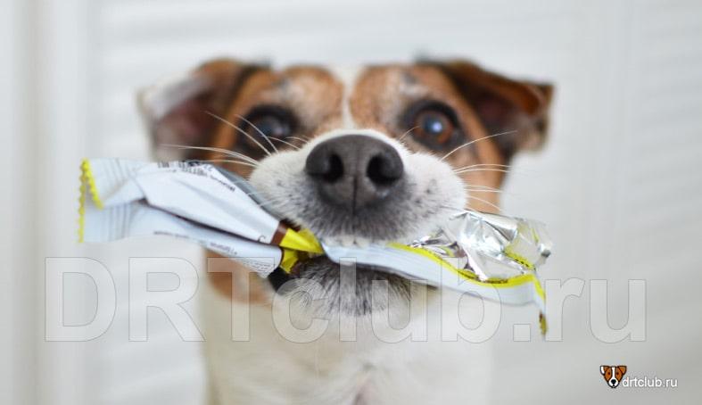 Излишнее скармливание собакам сладкого