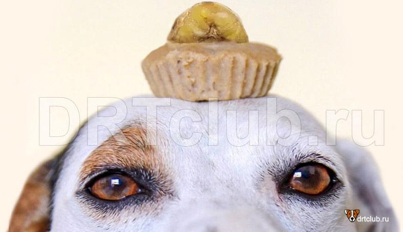 Кексы для собак своими руками