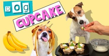 Dog cupcake recipe