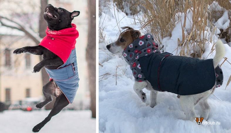 Зимняя попона для собаки