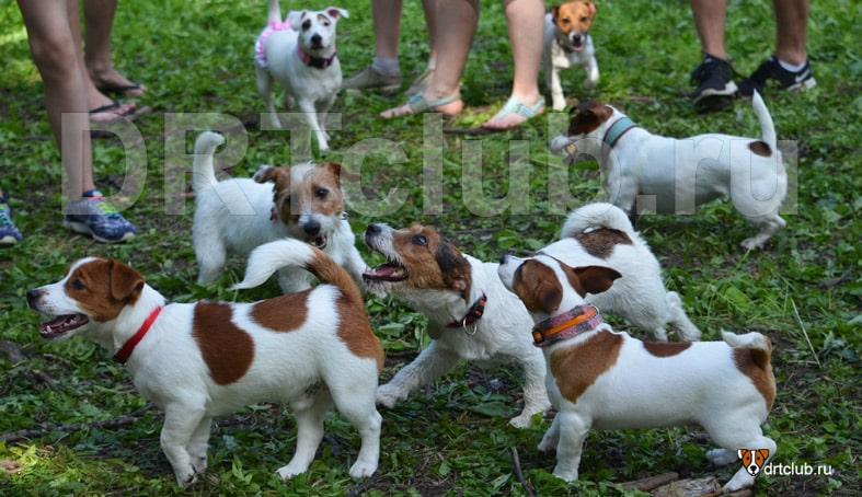 Собачьи тусовки: польза или вред