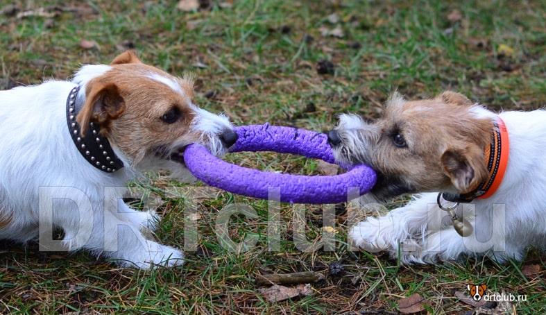 Социализация взрослых собак