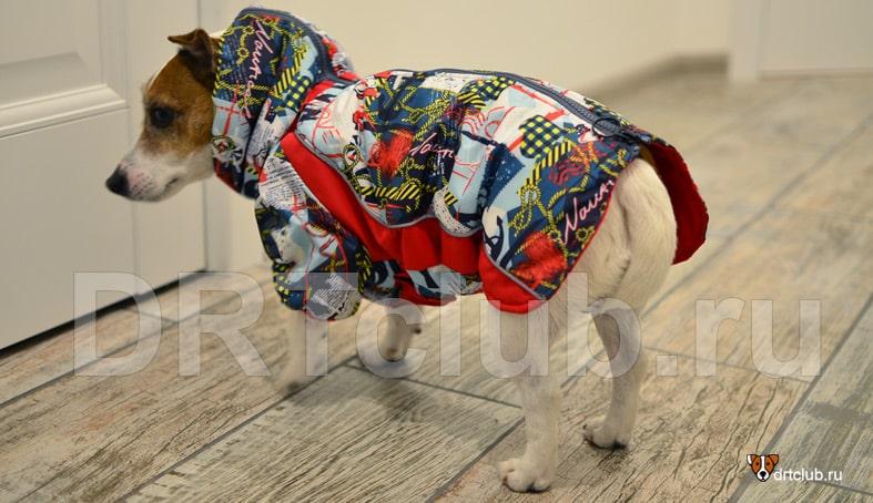 Зимняя курточка для собаки от joy-jack