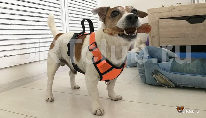 Шлейка Truelove для собаки своими руками