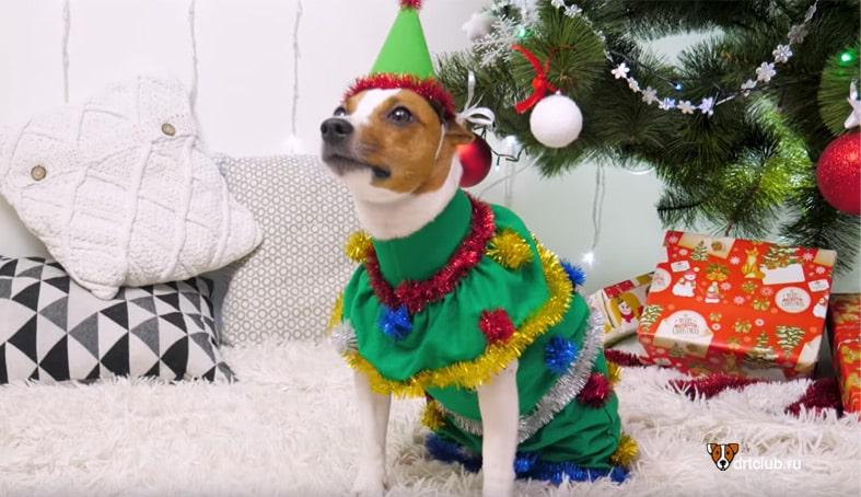 Новогодний костюм ёлочки для собаки