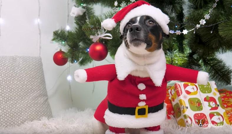 Делаем костюм Деда Мороза для собаки