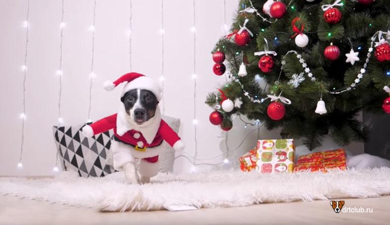 Маленький хвостатый Дед Мороз
