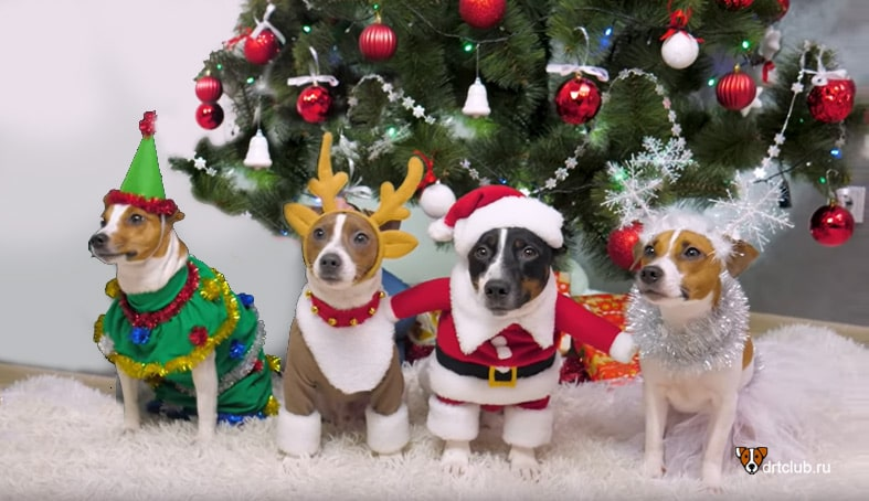 Новогодний костюм для собаки своими руками