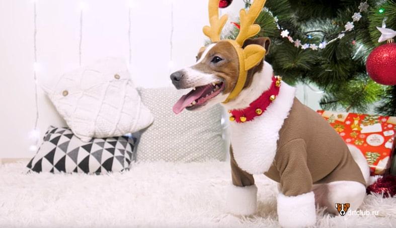 Новогодний костюм оленя для собаки
