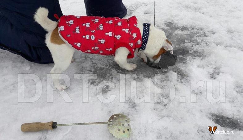 Зимняя рыбалка с собакой