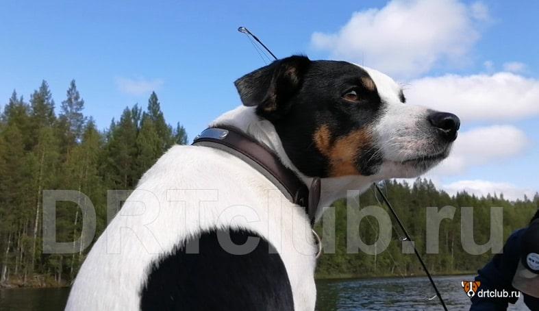 Собака на рыбалке: плюсы и минусы