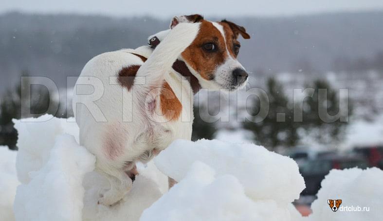 Причины изменения цвета шерсти у собак