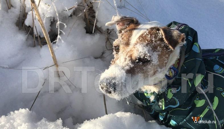 Правила кормления собак в холодное время года