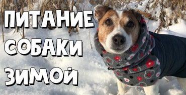Правила кормления собаки в холодное время года