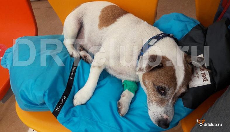 Джек после операции по кастрации