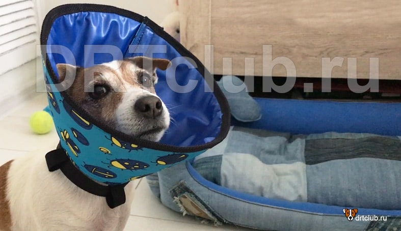 Мягкий воротник в виде конуса для собак