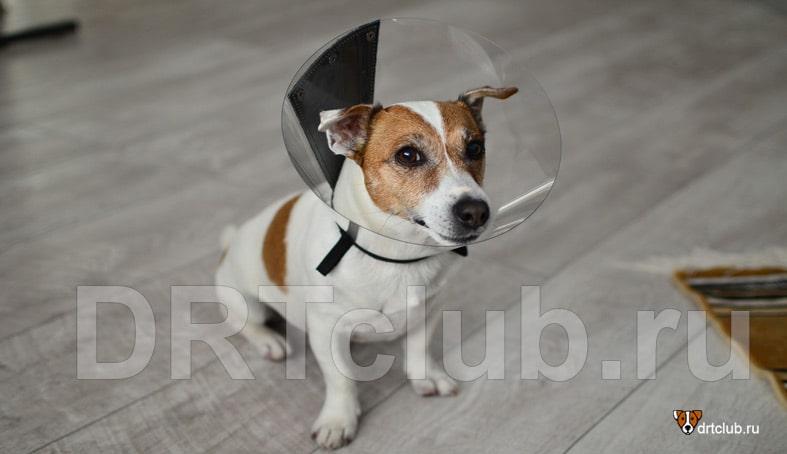 Пластиковый защитный воротник для собак