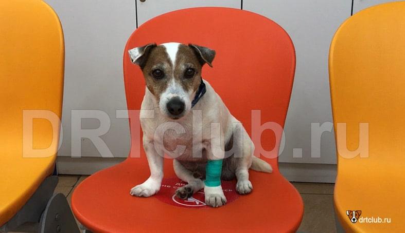 Кастрация и стерилизация собак за и против