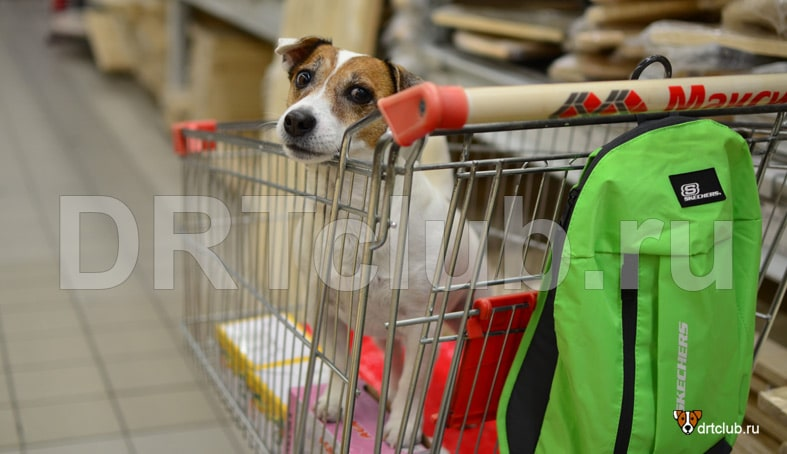 Собака в магазине в тележке