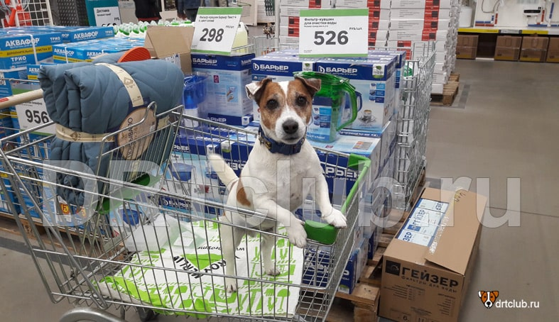 Можно ли с собакой заходить в магазин